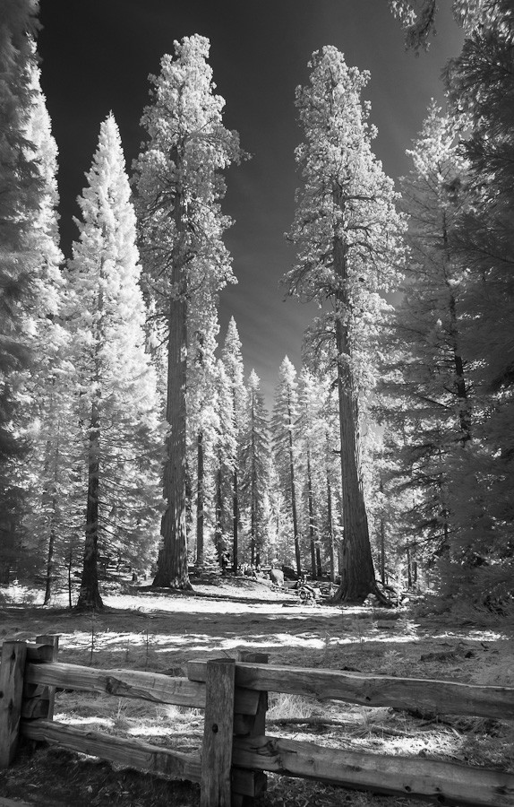 Giants, Sequoias National Park