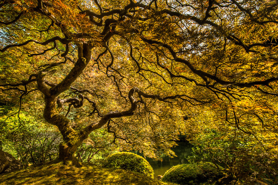 The Tree of Life, Portland Japanese Garden